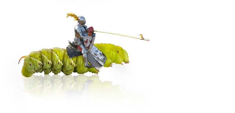 small-jousting-para2