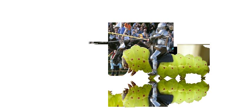 small-jousting-para3